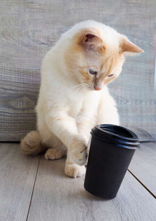 beautiful white young cat upsets, bites a paper Cup of coffee, to play, to indulge in