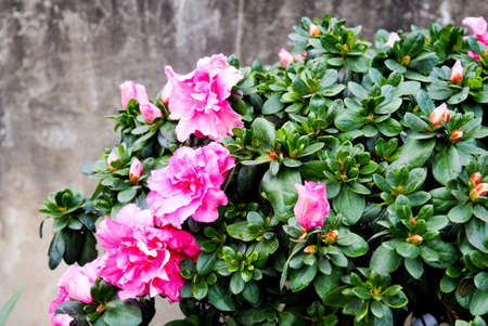 Close up flowers background. Amazing view of colorful pink flowering in the garden and green grass landscape at sunny summer or spring day.