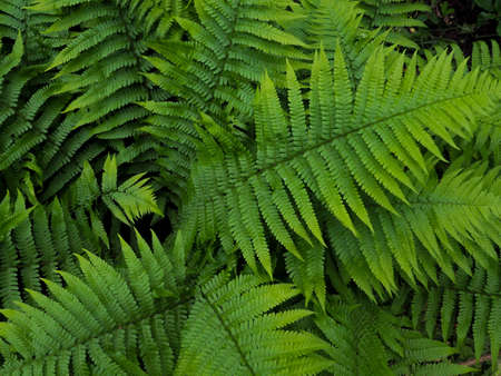 Creative layout made of green leaves. fern, bracken, Flat lay. Nature background Stockfoto