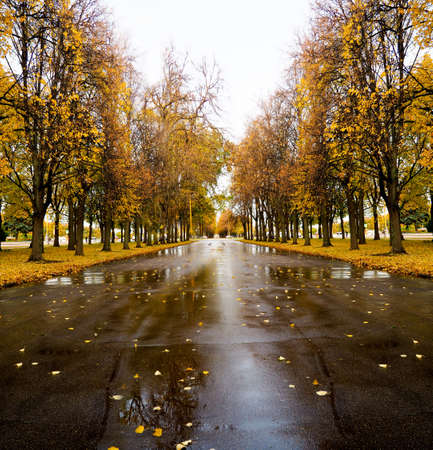 warm peaceful day in the autumn park.