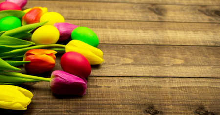 Banner for website Easter eggs and fresh spring tulips on a wooden