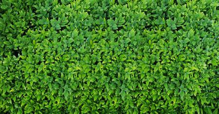Banner for website Green Leaves