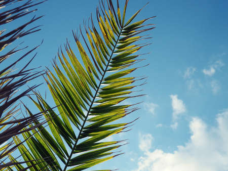 Close-up of palm leaves, tropical banners, background for design. 版權商用圖片