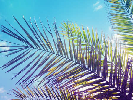 Banner palm leaves, tropical banners, background for design.