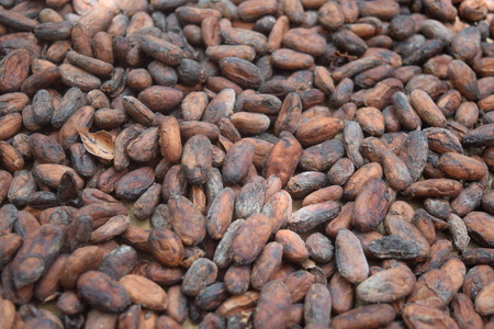 Isolated, close-up of Cacao Beans