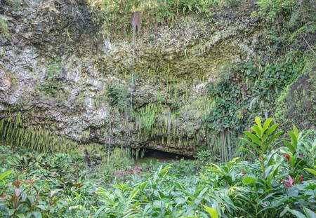 シダの洞窟、緑豊かな熱帯植物のクローズ アップ