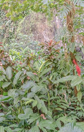 Ginger and other tropical plants against a stone cliff wall Reklamní fotografie