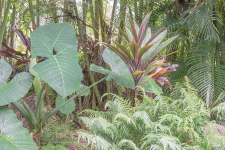 Closeup of a variety of tropical plants