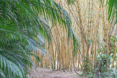 Multiple bamboo plants with palm fronds in the foreground