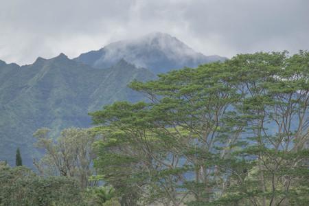 熱帯山雲、カウアイ島で、前景に Moluccan ネムノキ大木 写真素材