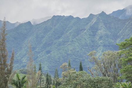カウアイ島で、手前の木と曇りの日の山脈 写真素材 - 83524683