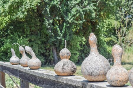 sized: Multi-sized gourds drying on top of a wooden fence, with trees in the background