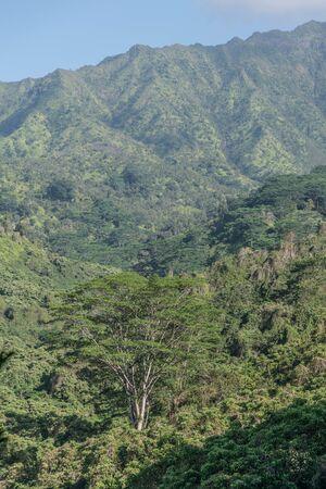 熱帯の緑豊かな山々、木々、カウアイ島での Kuilua トレイルに沿って、他の熱帯植物 写真素材 - 83627110