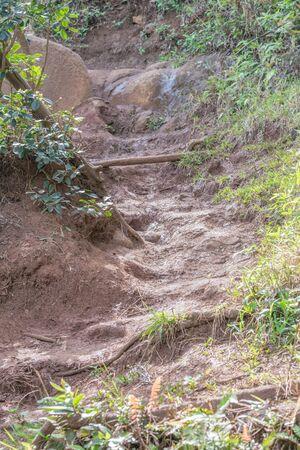 Portion of the Nounou Trail, or Sleeping Giant Trail, on Kauai Фото со стока