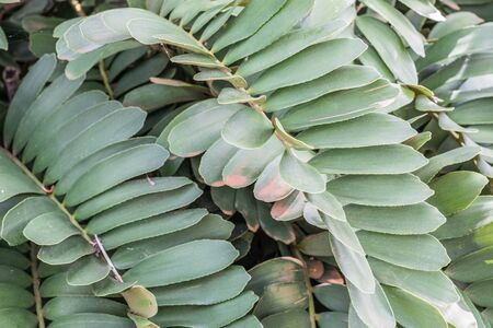 Isolated, close-up of a plant with long green leaves Stock Photo