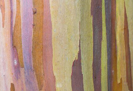 Isolated close up of rainbow eucalyptus tree bark
