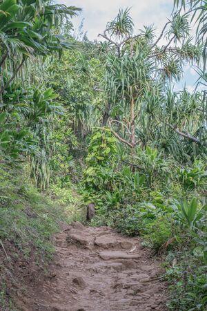 Portion of the Kalalau trail with a variety of tropical plants, on Kauai