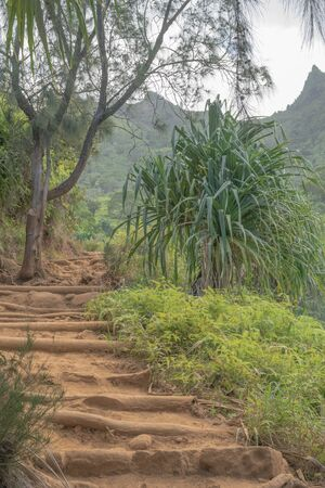Steps going up along the Kalalau Hiking Trail, on Kauai Imagens
