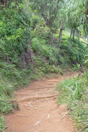 Partial view of the Kalalau Hiking Trail with various plants, on Kauai