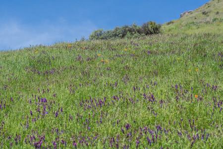 鳥ヘアリーベッチと青い空の丘 写真素材