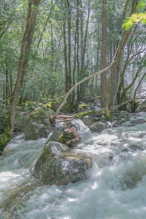 바위와 나무로 강을 돌진 스톡 콘텐츠