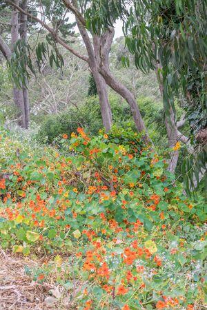 Orange wildflowers, other greenery, and wispy trees
