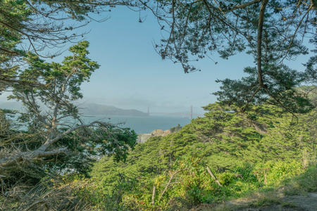 Lush greenery with a peek a boo view of the Golden Gate Bridge, from Lands End hiking trail, in San Francisco Stock Photo