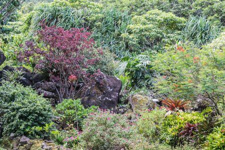 An assortment of tropical plants, at the Limahuli Garden and Preserve-National Botanical Garden, Haena, Halelea, Kauai, Hawaii
