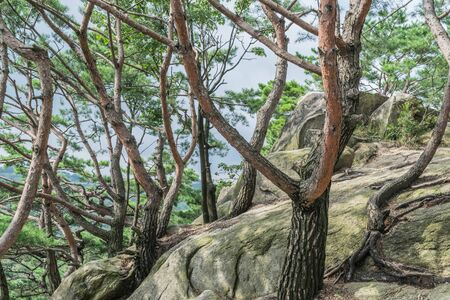 Trees and rocky terrain along the Mt. Bugak lookout trail, in Samcheongdong Park, Seoul, South Korea