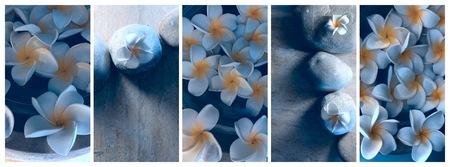 Plumeria spa flower blooming cold toning
