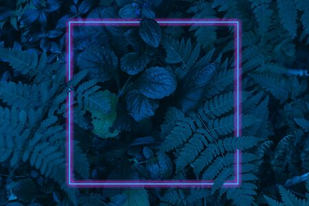 Neon light frame glowing behind leaves. Duotone creative background