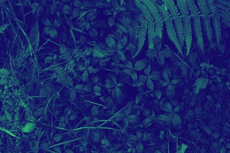 Creative layout made of dark green leaves. Flat lay. Nature background duotone Zdjęcie Seryjne