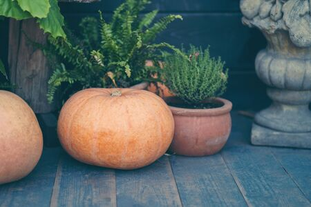 Pumpkins autumnal composition wooden background space for text