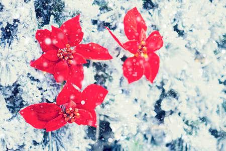 Closeup of red decoration hanging on Christmas tree. 免版税图像