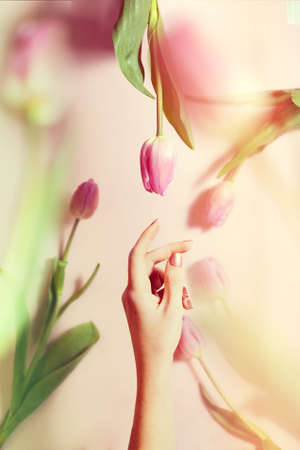 bouquet of tulips levitation woman hand 免版税图像