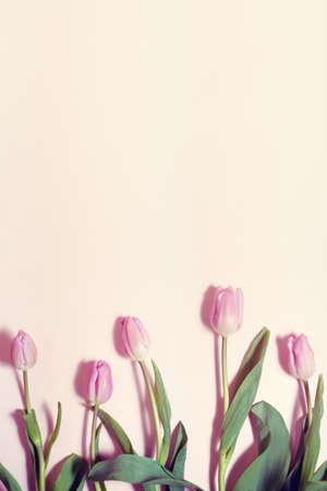 bouquet of tulips on pastel background 免版税图像