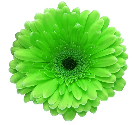 Green flower  Stock Photo