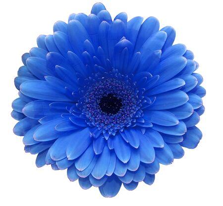 flores color pastel: Flor azul Foto de archivo