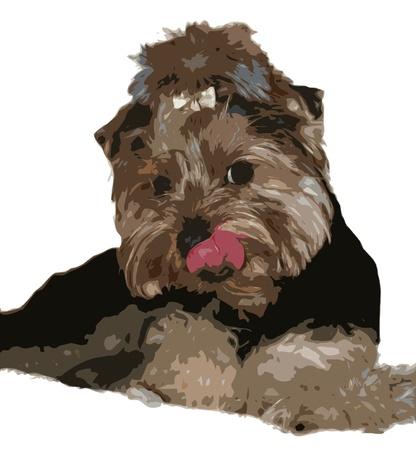 yorkshire terrier: Vector Cute Little Terrier Dog