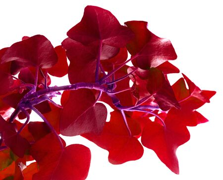 amaranthine: Bright leafs