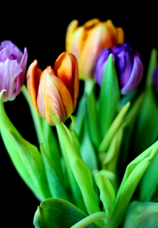 Colorful bouquet of tulips on the black background Stock Photo - 18136188