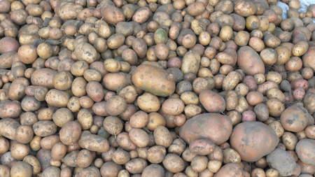 Young raw potatoes. Hands peel potatoes. Close-up.
