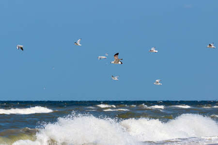 windy: Seagulls over sea on a windy and stormy day