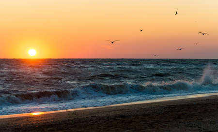 azov: Sunrise during a storm on the Sea of Azov. Pack of seagulls at sunrise