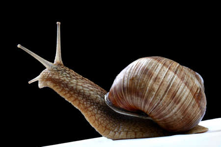 Snail against black background