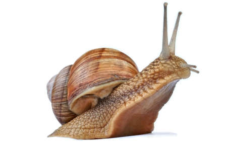 Snail against white background Banco de Imagens