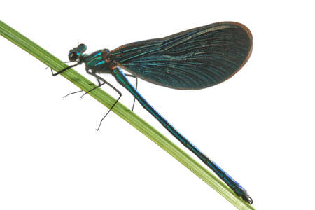 antenna dragonfly: Green dragonfly Stock Photo