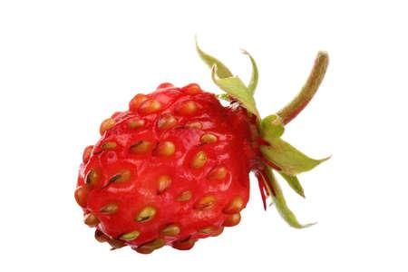 Forest Strawberry Banco de Imagens
