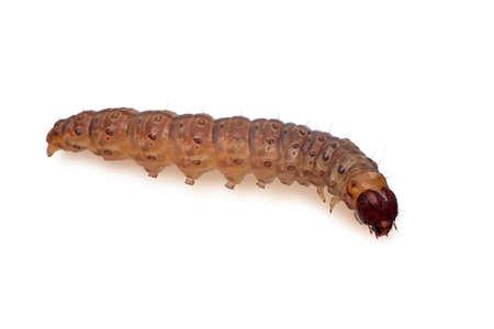Caterpillar Banco de Imagens