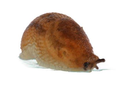 Slug Reklamní fotografie